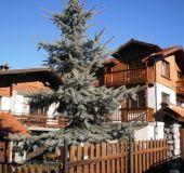 House Villa Rozi