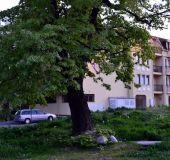 Apartment Nadezhda