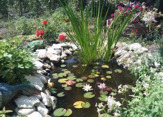 Къща Водна лилия
