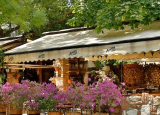 Стария чинар - Македония, Варна