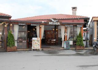 Белуга, Несебър