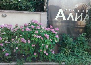 Алианс, Пловдив