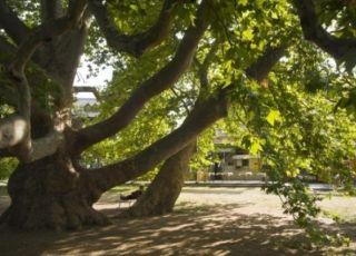 Двата ореха, Съединение, Пловдив