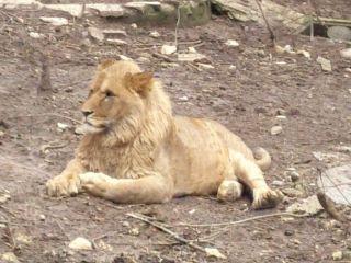 Зоопарк Габрово