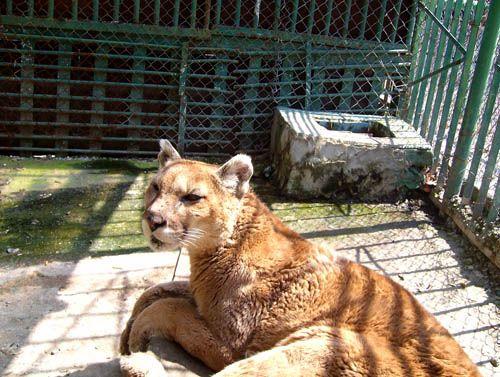 Zoopark Varna Informaciya Otzivi Karta I Snimki Pochivka Bg