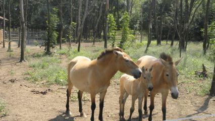 Център за защита на природата и животните Добрич