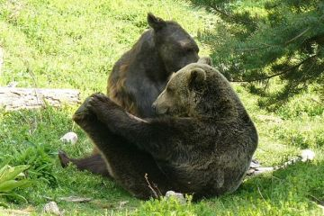 Комплекс за танцуващи мечки