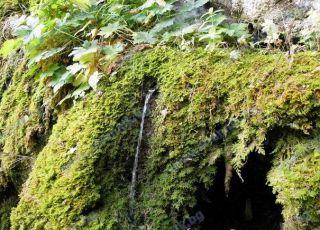 Извор Света вода Благодатна