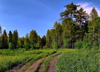 Резерват Тисата - Пирин
