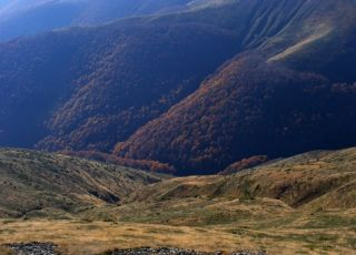 Резерват Църна река - Сажденик