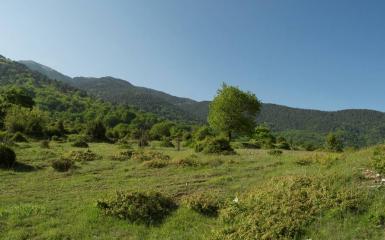 Али ботуш (резерват)