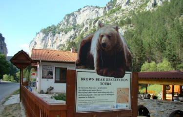Музей на мечката