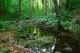 Марина река (защитена местност) thumbnail 5