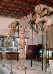 Палеонтологичен музей