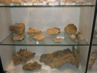 Музей на родопския карст