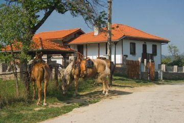 Конна база Балкан