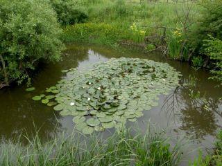 Резерват за водни кончета