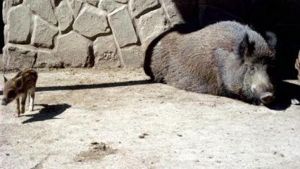 Зоопарк Павликени