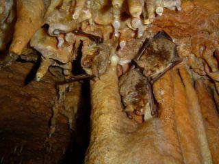 Голашка пещера