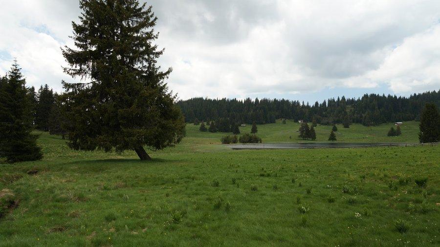 Хайдушки поляни (местност)