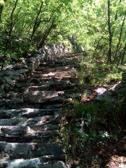 Зелената пътека